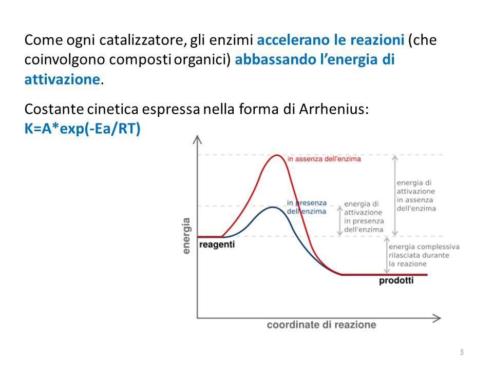Come ogni catalizzatore, gli enzimi accelerano le reazioni (che coinvolgono composti organici) abbassando l'energia di attivazione.