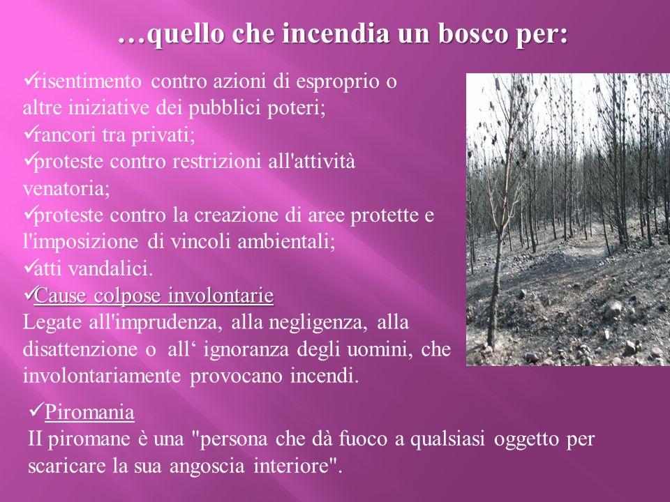 …quello che incendia un bosco per: