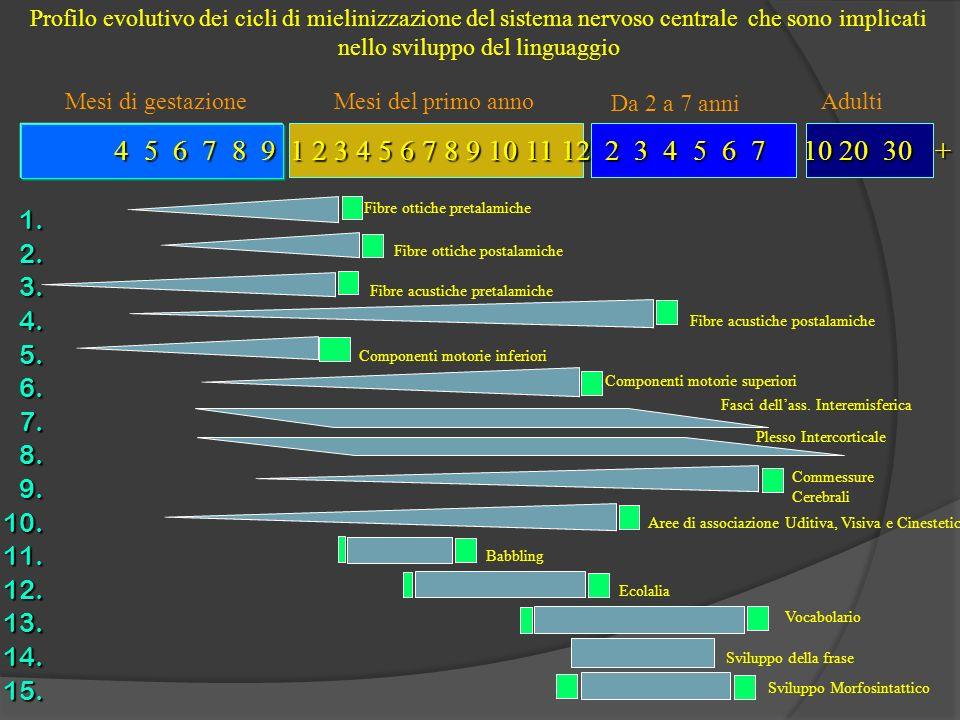 Profilo evolutivo dei cicli di mielinizzazione del sistema nervoso centrale che sono implicati nello sviluppo del linguaggio