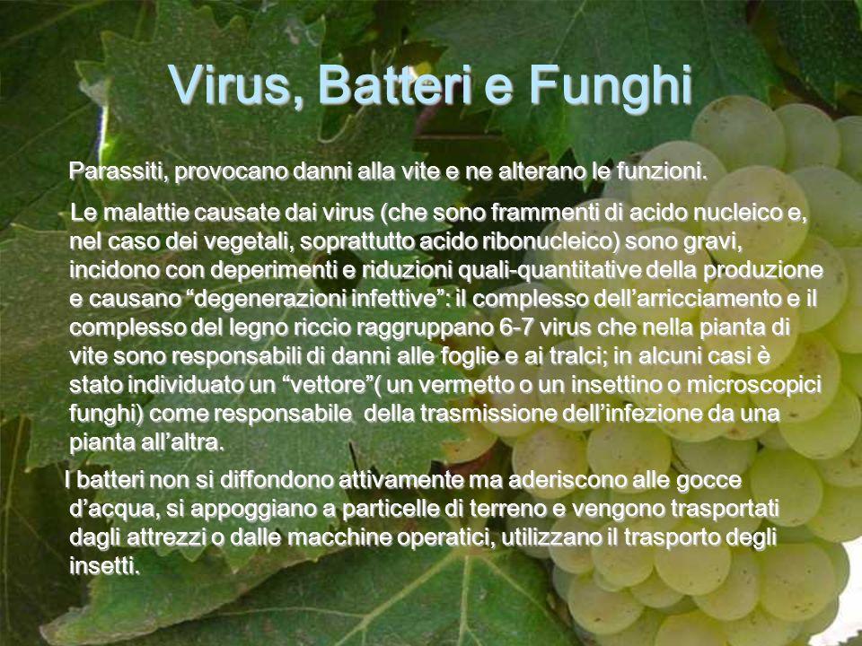 Virus, Batteri e Funghi Parassiti, provocano danni alla vite e ne alterano le funzioni.