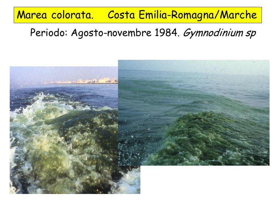Marea colorata. Costa Emilia-Romagna/Marche