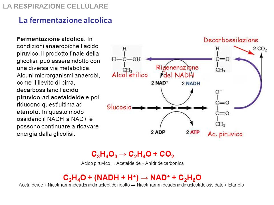 C2H4O + (NADH + H+) → NAD+ + C2H6O