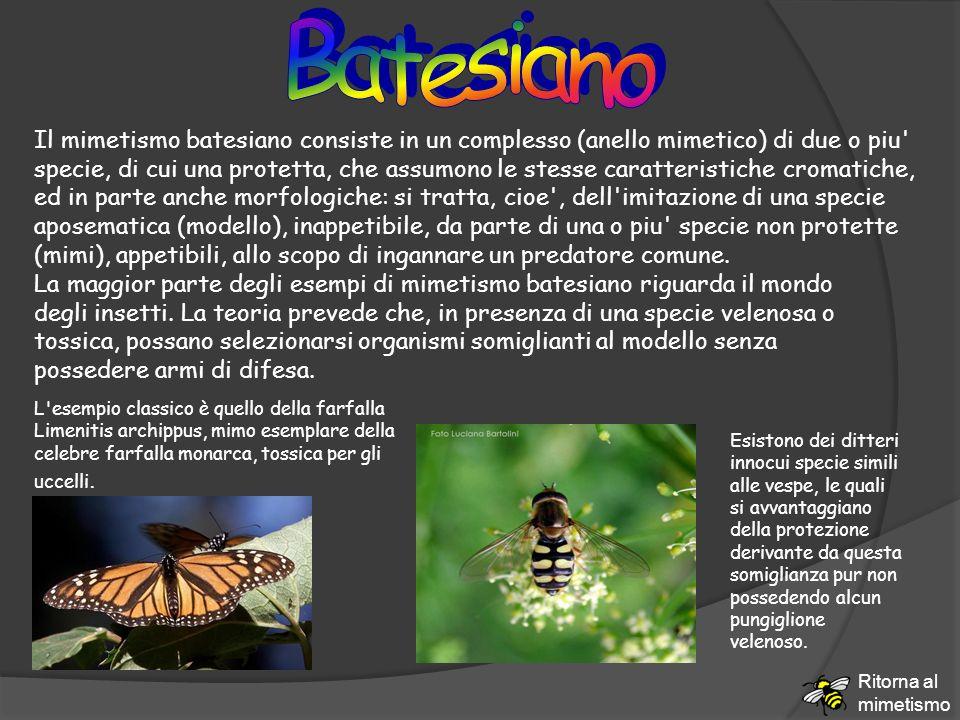 Batesiano