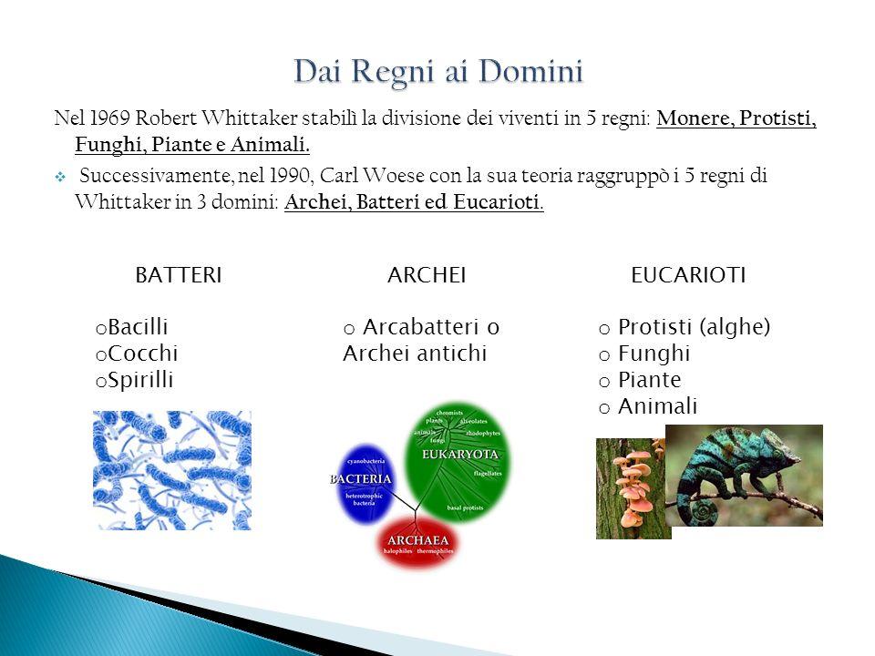 Dai Regni ai Domini Nel 1969 Robert Whittaker stabilì la divisione dei viventi in 5 regni: Monere, Protisti, Funghi, Piante e Animali.