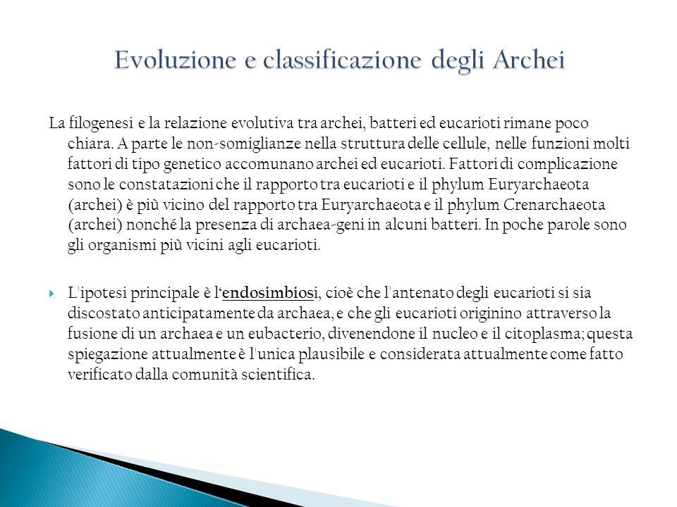 Evoluzione e classificazione degli Archei