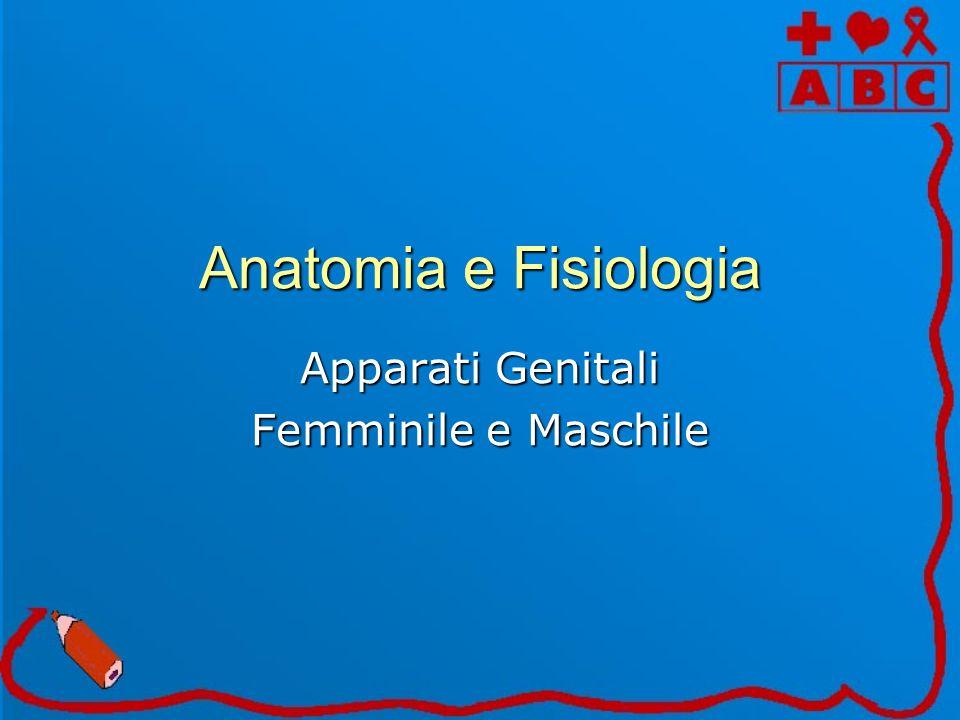 Apparati Genitali Femminile e Maschile