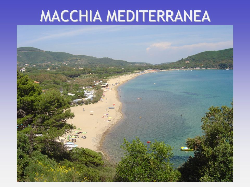 MACCHIA MEDITERRANEA