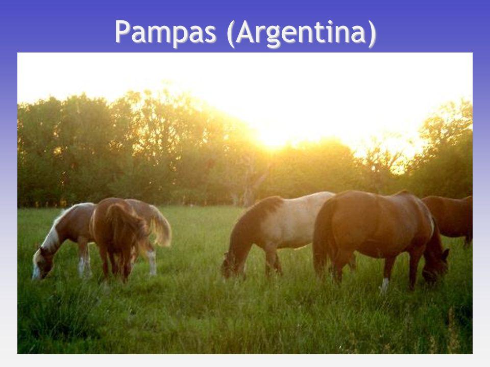 Pampas (Argentina)