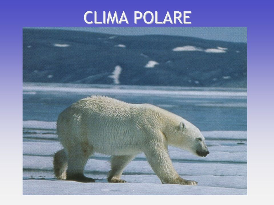 CLIMA POLARE