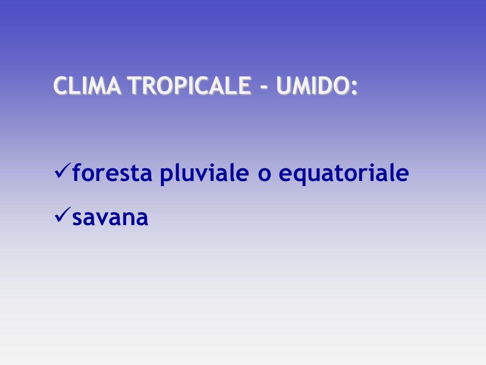 CLIMA TROPICALE - UMIDO: