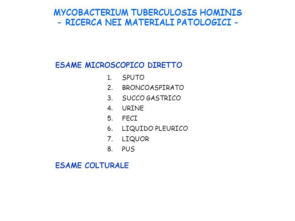 MYCOBACTERIUM TUBERCULOSIS HOMINIS