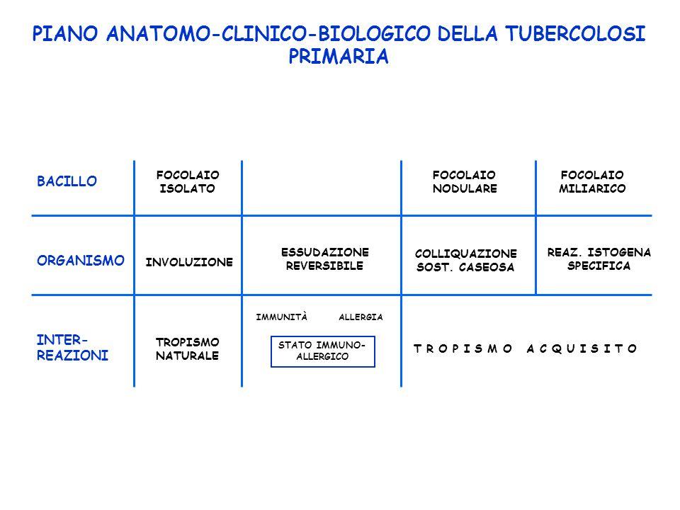 PIANO ANATOMO-CLINICO-BIOLOGICO DELLA TUBERCOLOSI PRIMARIA