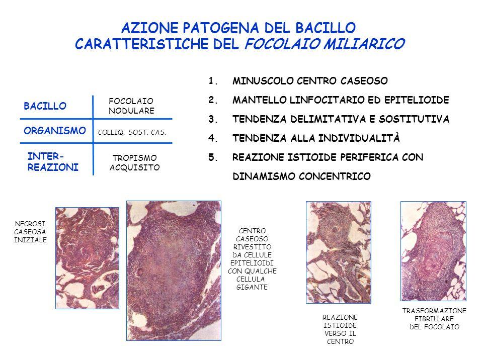 AZIONE PATOGENA DEL BACILLO CARATTERISTICHE DEL FOCOLAIO MILIARICO