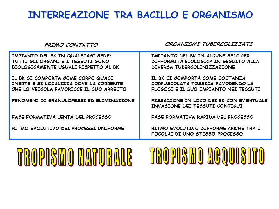 INTERREAZIONE TRA BACILLO E ORGANISMO