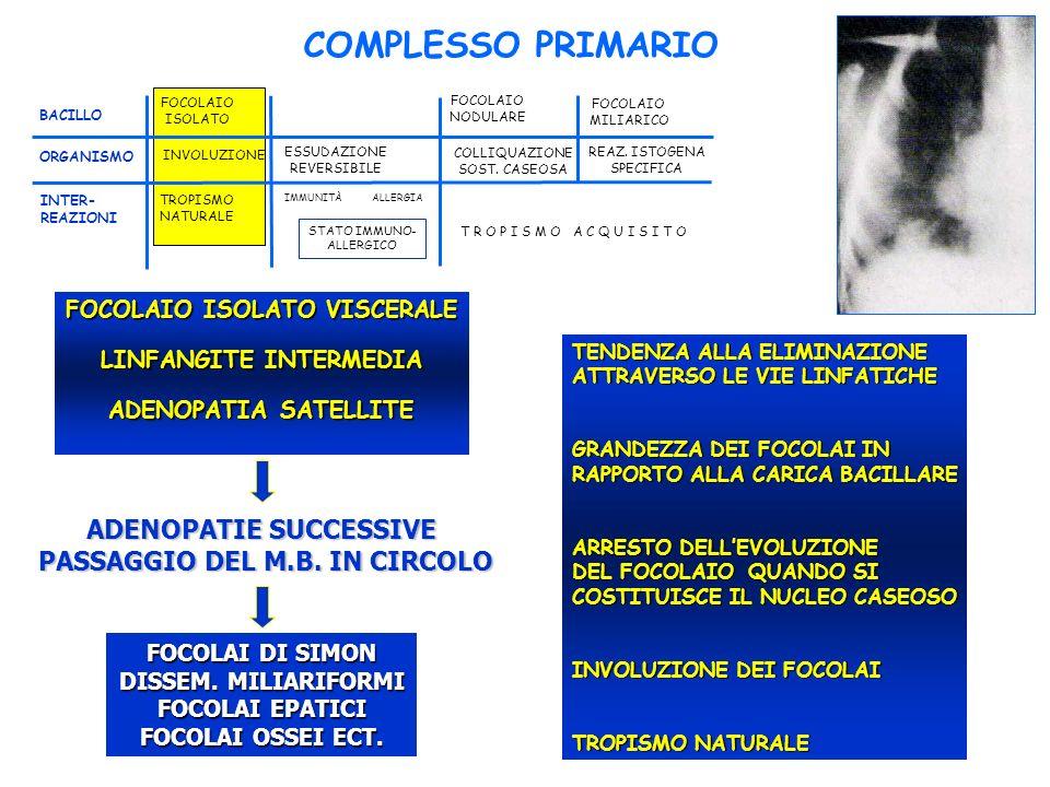 COMPLESSO PRIMARIO ADENOPATIE SUCCESSIVE PASSAGGIO DEL M.B. IN CIRCOLO