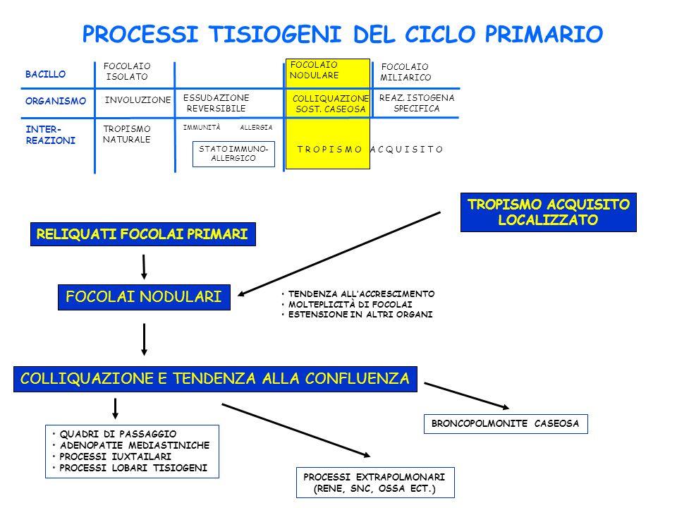 PROCESSI TISIOGENI DEL CICLO PRIMARIO