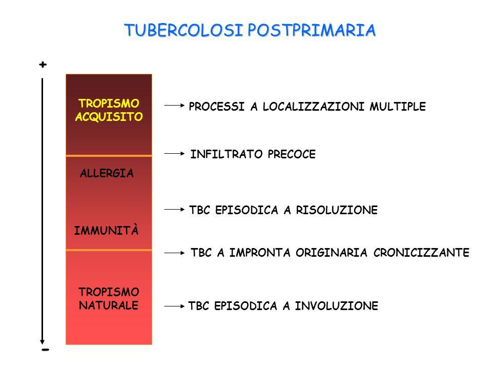 - TUBERCOLOSI POSTPRIMARIA + TROPISMO