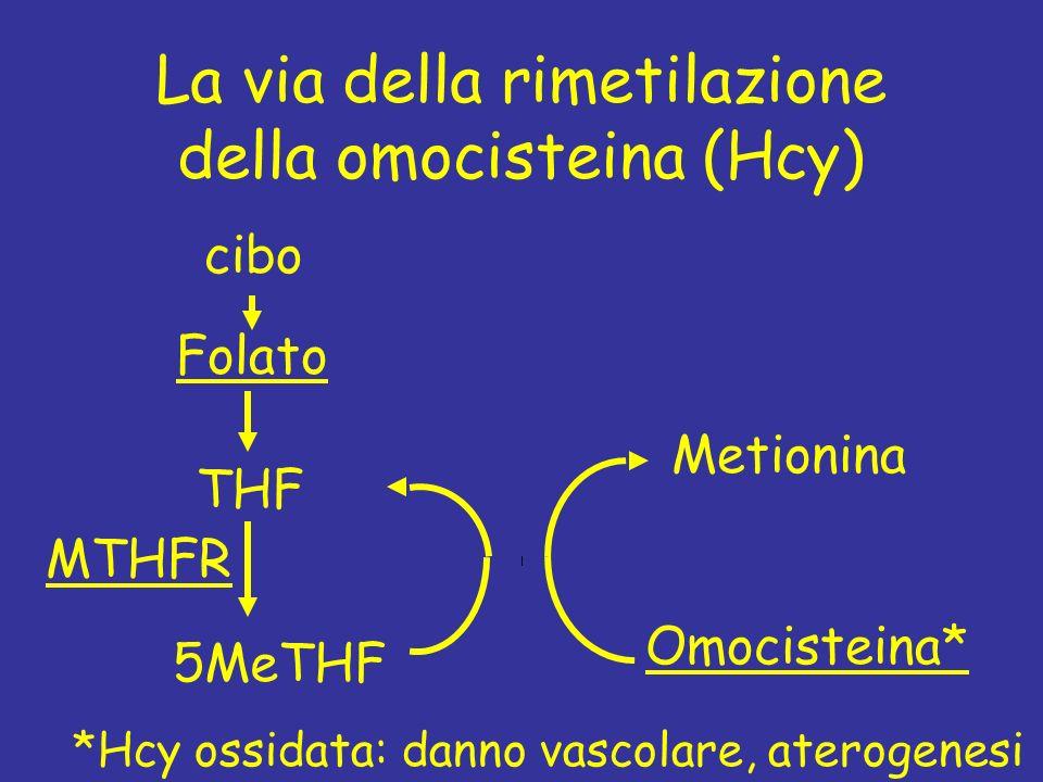 La via della rimetilazione della omocisteina (Hcy)