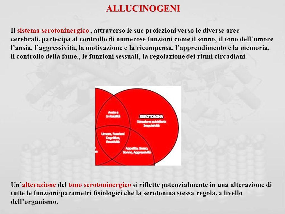 ALLUCINOGENI Il sistema serotoninergico , attraverso le sue proiezioni verso le diverse aree.