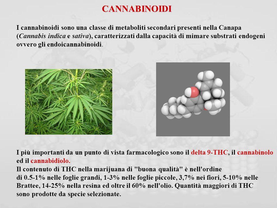 CANNABINOIDI I cannabinoidi sono una classe di metaboliti secondari presenti nella Canapa.