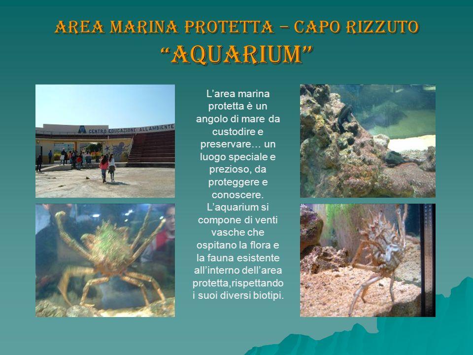 Area marina protetta – Capo Rizzuto Aquarium