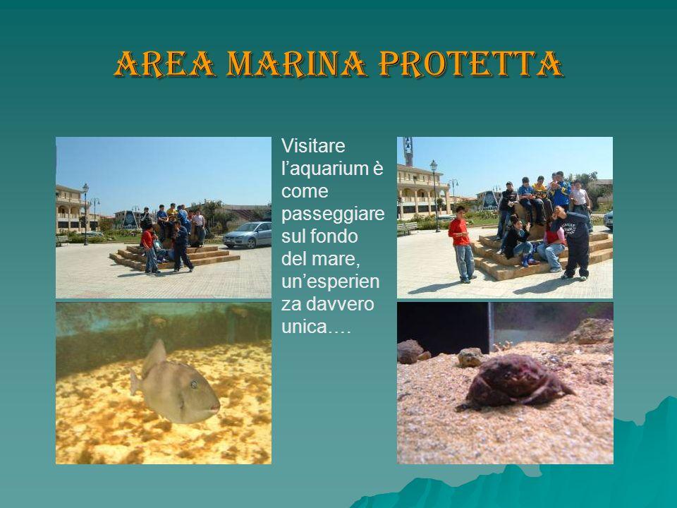 Area Marina Protetta Visitare l'aquarium è come passeggiare sul fondo del mare, un'esperienza davvero unica….