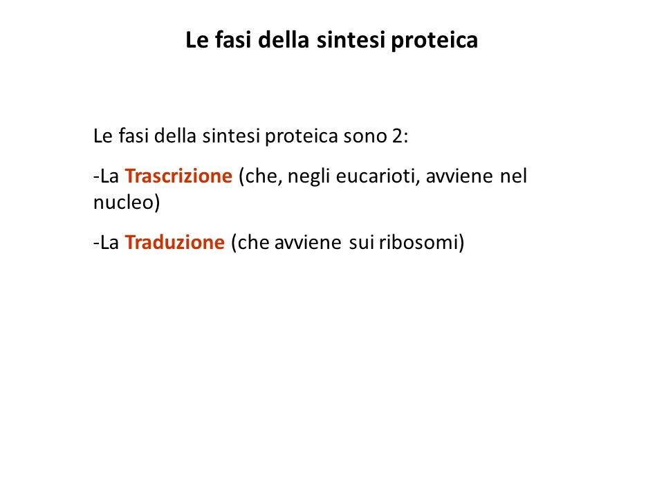 Le fasi della sintesi proteica
