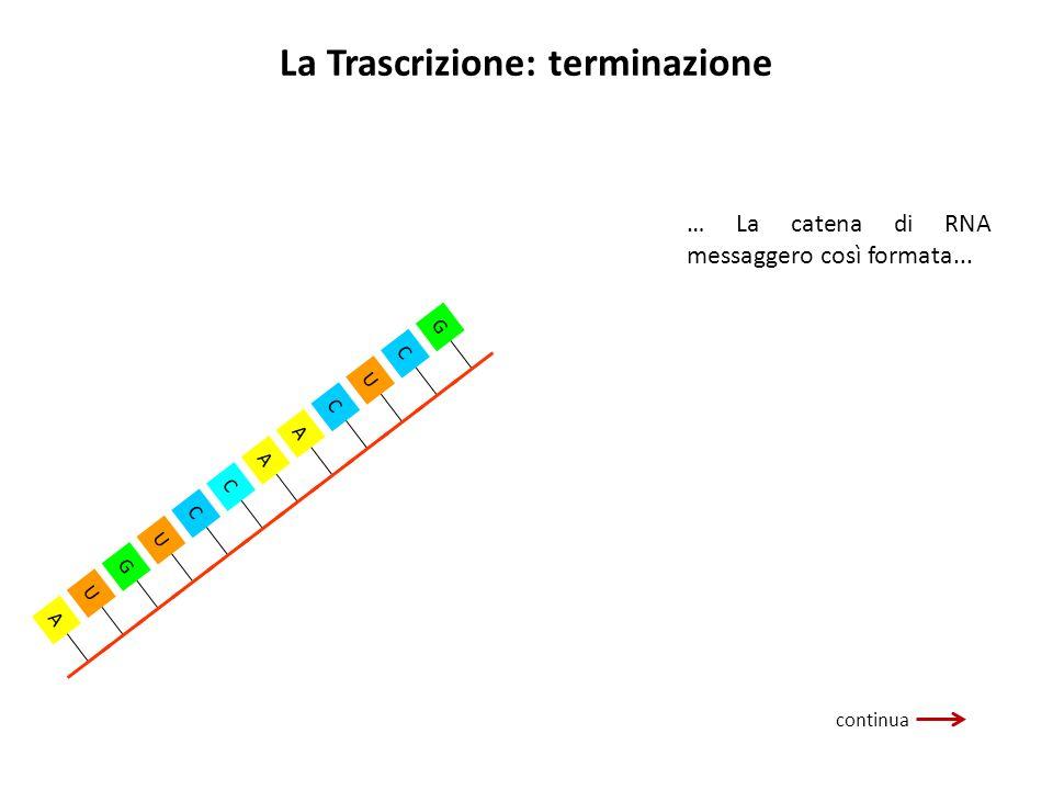 La Trascrizione: terminazione