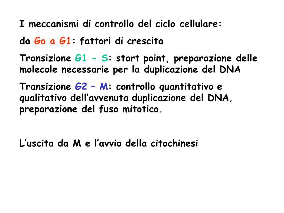 I meccanismi di controllo del ciclo cellulare: