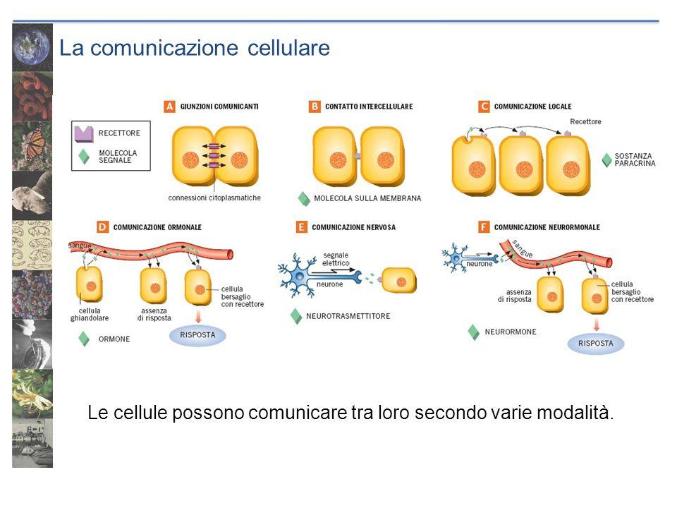 La comunicazione cellulare