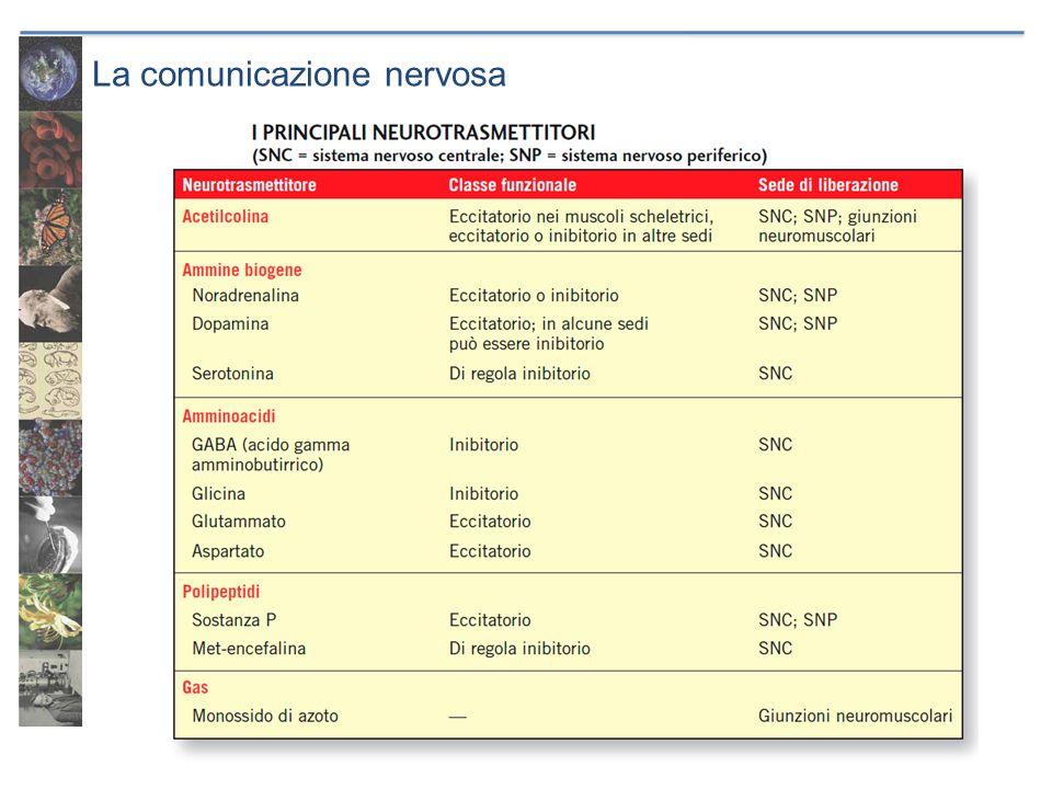 La comunicazione nervosa