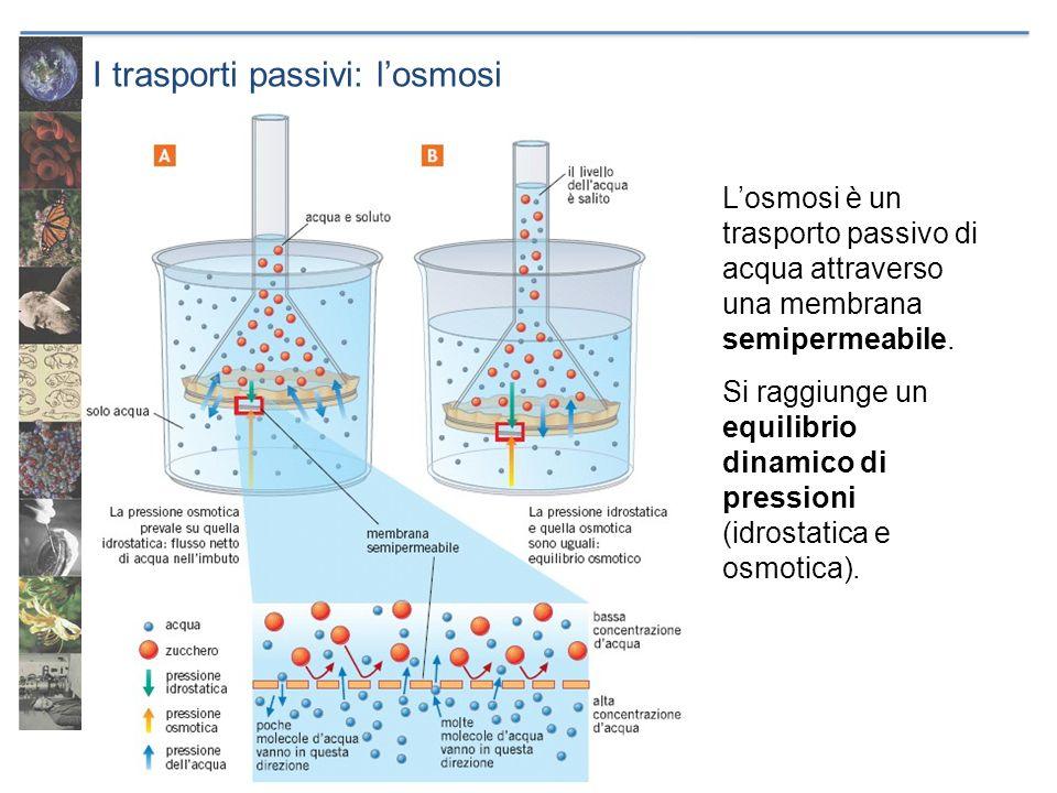 I trasporti passivi: l'osmosi
