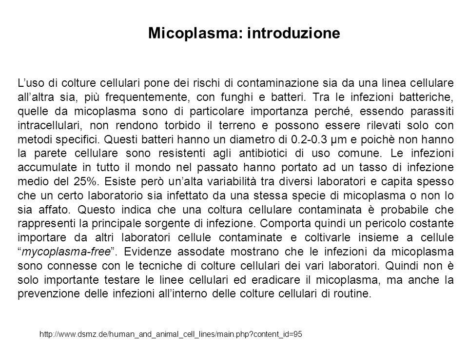 Micoplasma: introduzione
