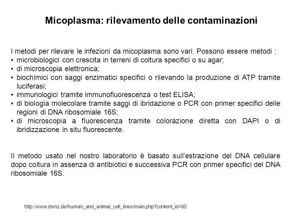 Micoplasma: rilevamento delle contaminazioni