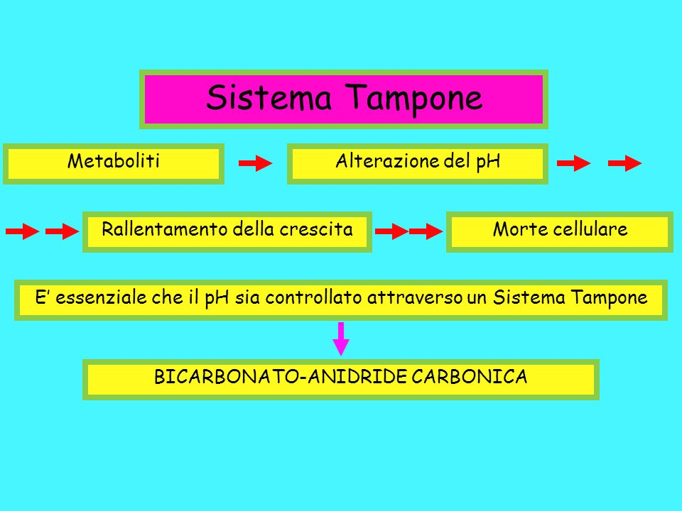 Sistema Tampone Metaboliti Alterazione del pH