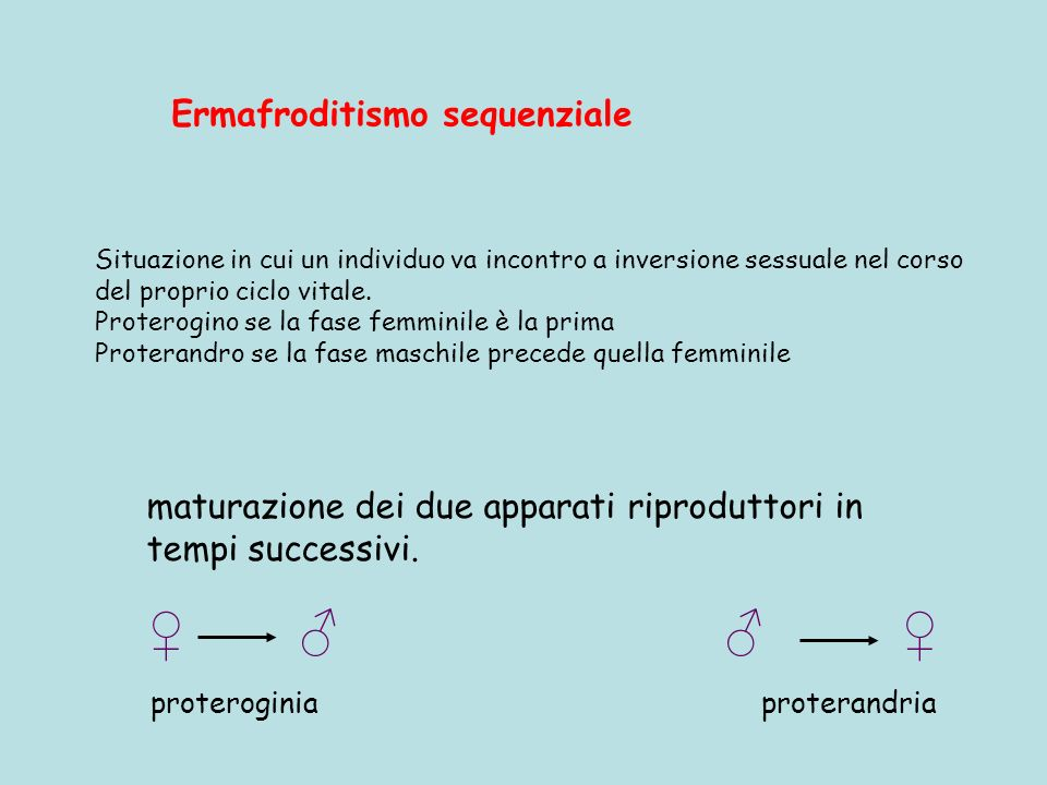 ♀ ♂ ♂ ♀ Ermafroditismo sequenziale