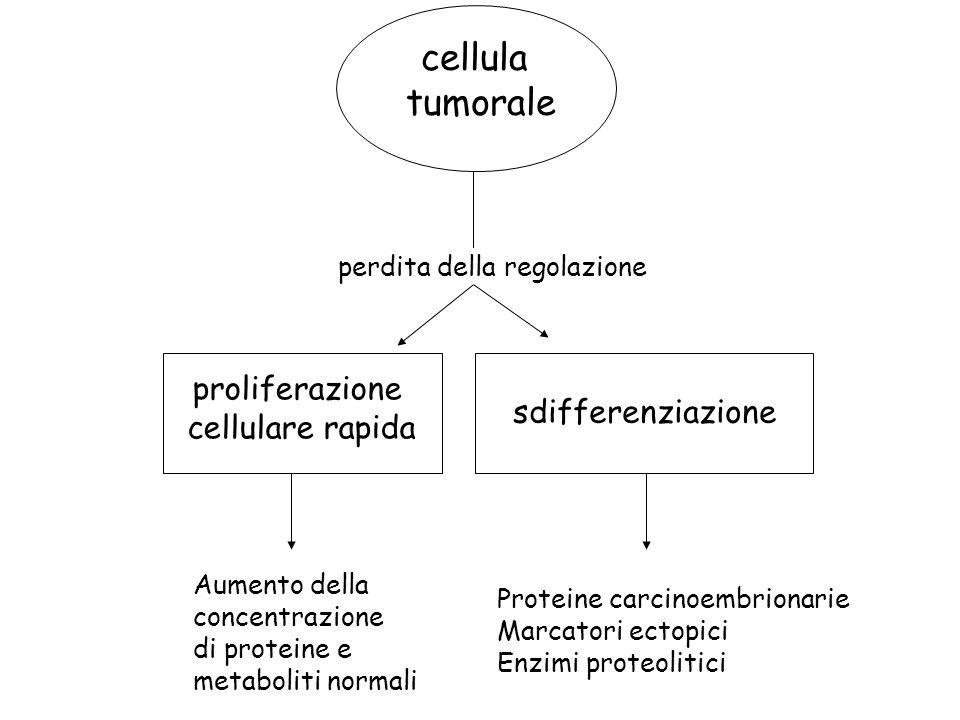 cellula tumorale proliferazione cellulare rapida sdifferenziazione
