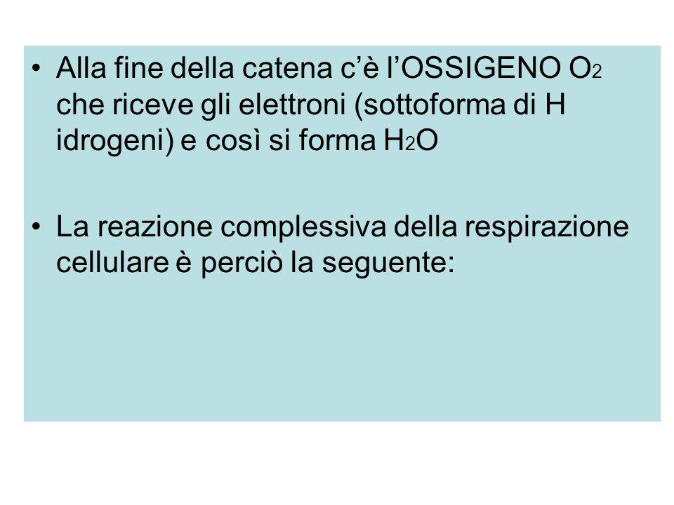 Alla fine della catena c'è l'OSSIGENO O2 che riceve gli elettroni (sottoforma di H idrogeni) e così si forma H2O