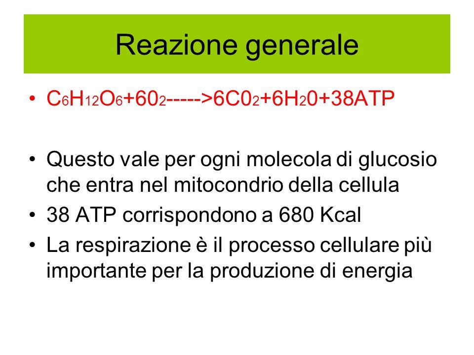 Reazione generale C6H12O6+602----->6C02+6H20+38ATP
