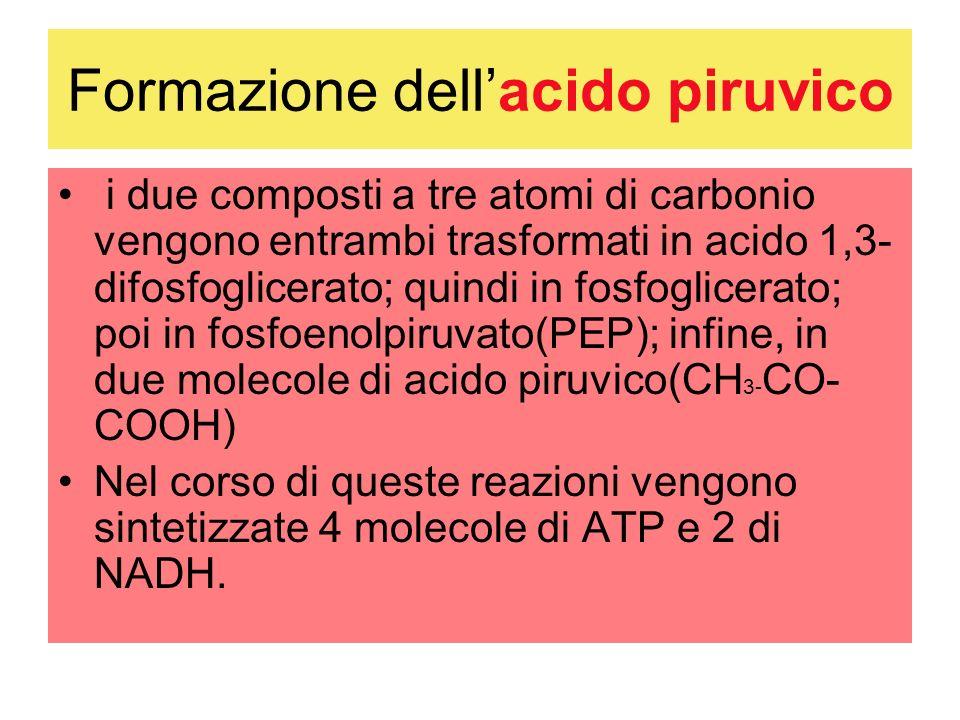Formazione dell'acido piruvico