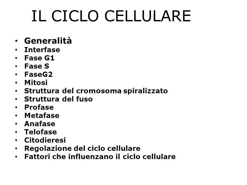 IL CICLO CELLULARE Generalità Interfase Fase G1 Fase S FaseG2 Mitosi