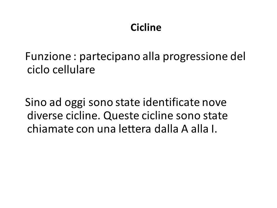 Cicline