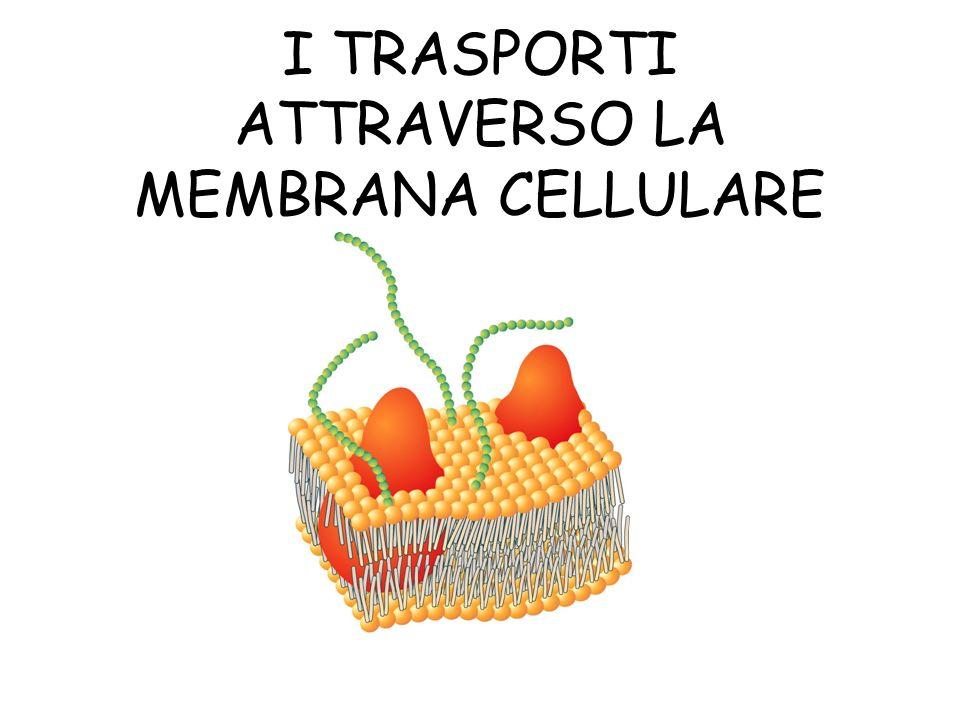 I TRASPORTI ATTRAVERSO LA MEMBRANA CELLULARE