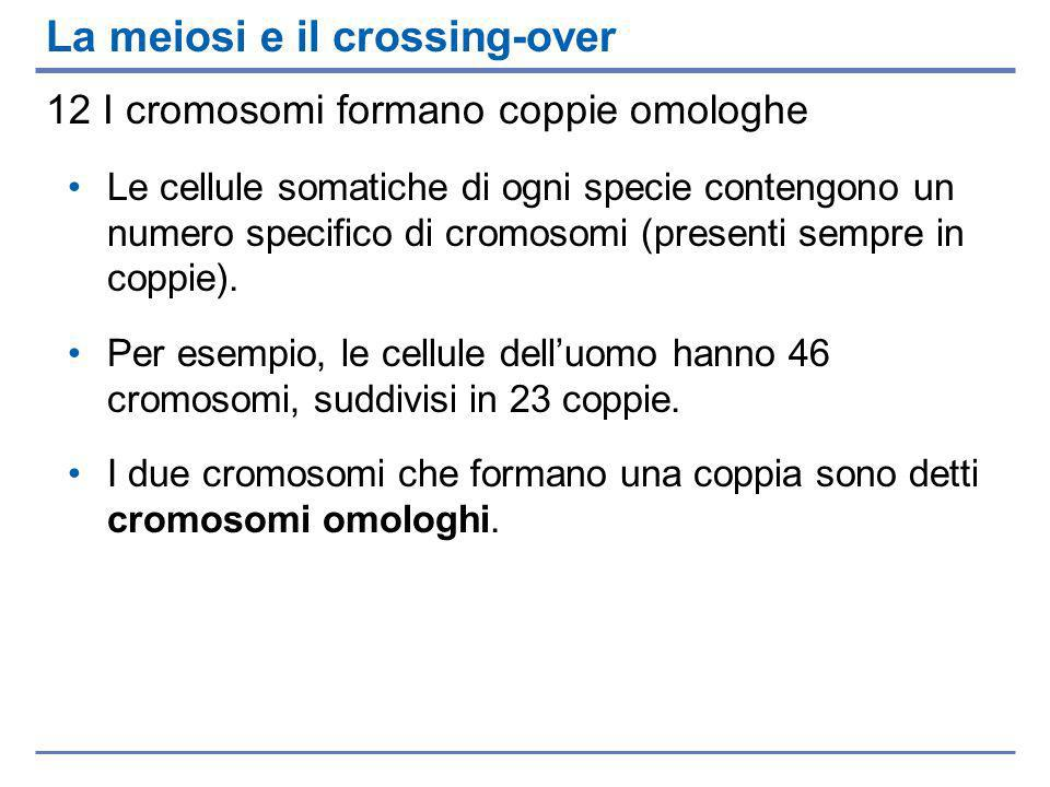 La meiosi e il crossing-over