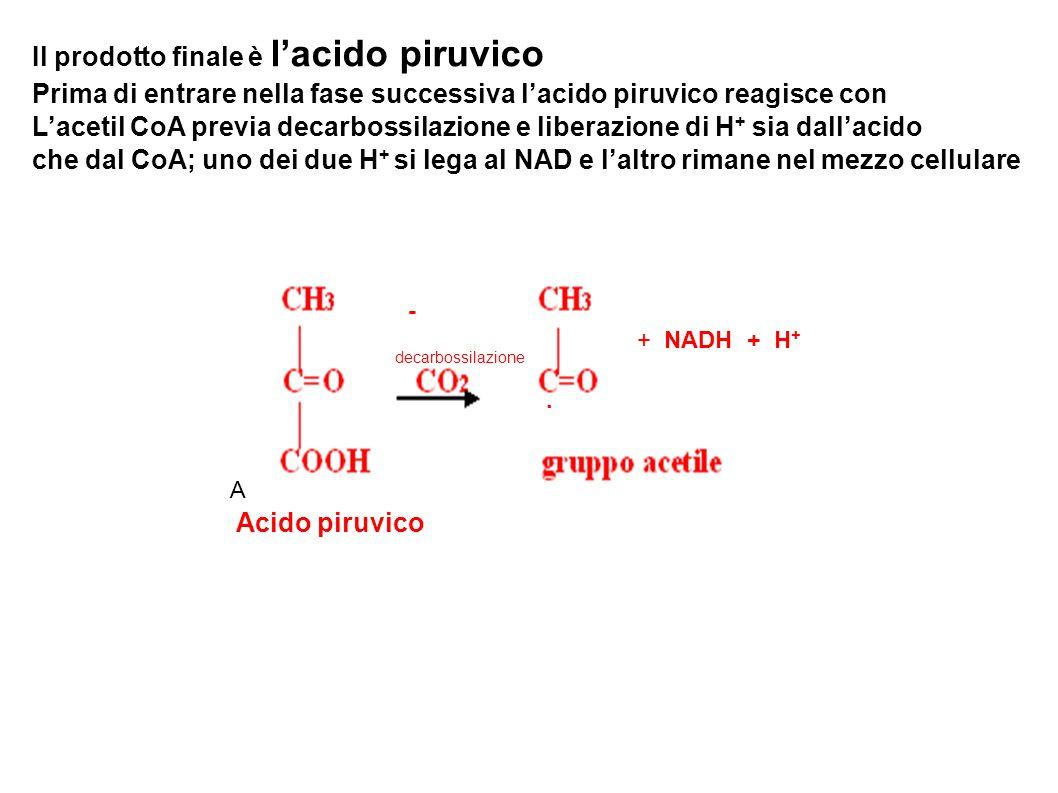 Il prodotto finale è l'acido piruvico
