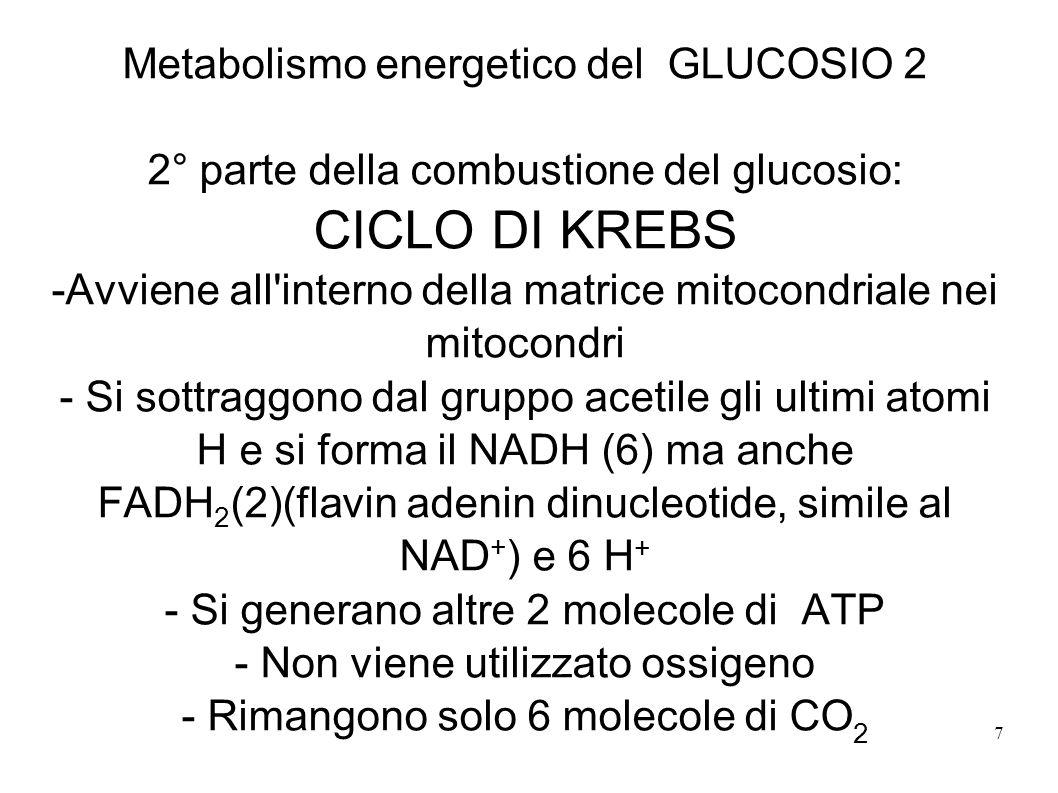 CICLO DI KREBS Metabolismo energetico del GLUCOSIO 2