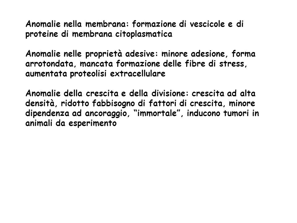 Anomalie nella membrana: formazione di vescicole e di proteine di membrana citoplasmatica