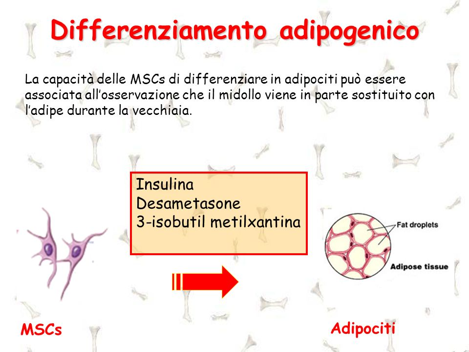 Differenziamento adipogenico