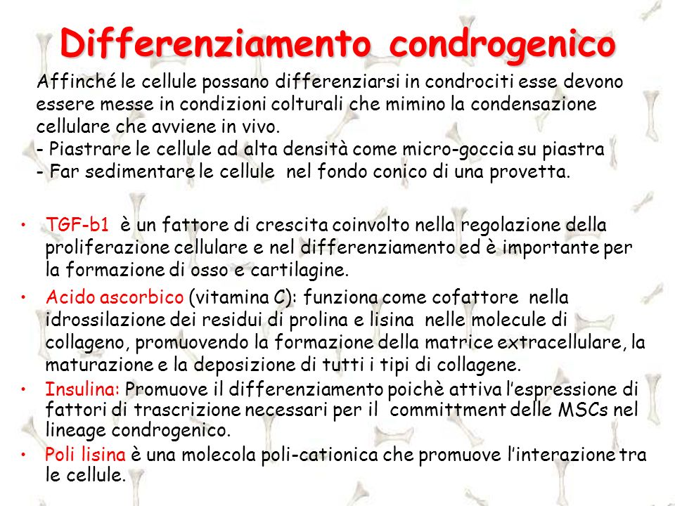 Differenziamento condrogenico