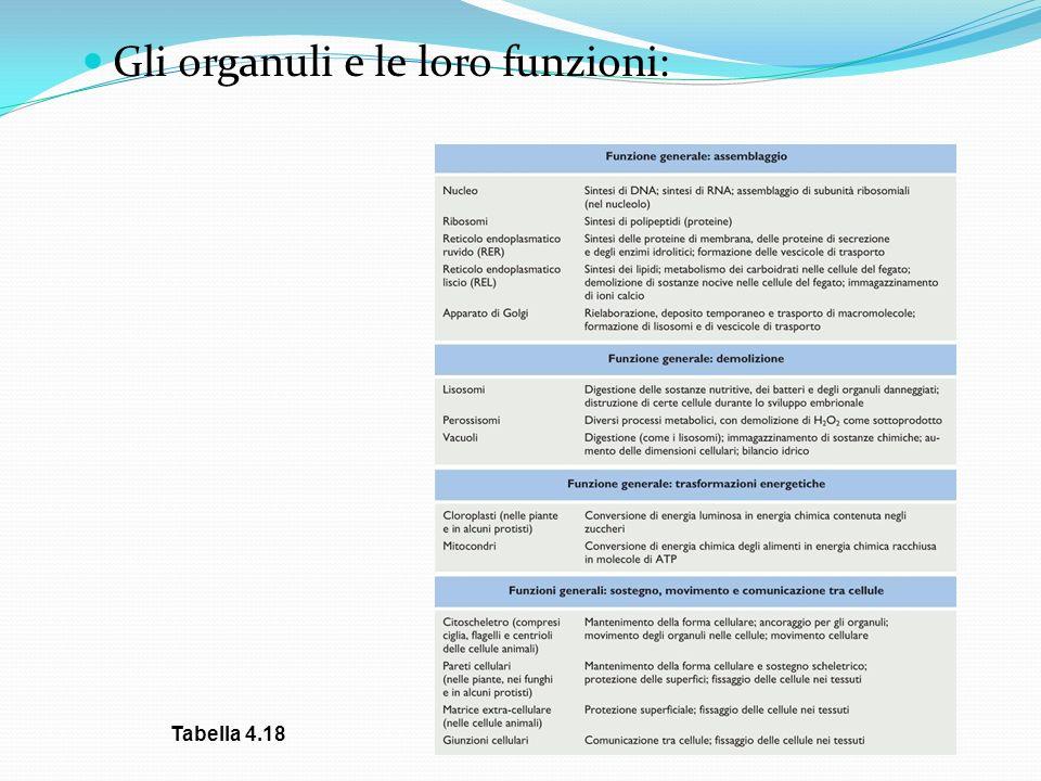 Gli organuli e le loro funzioni:
